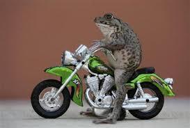 Các nhà kinh tế học yêu thích xe máy