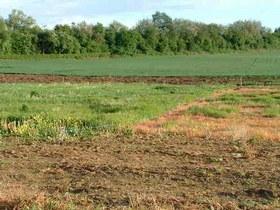 Giao dịch về quyền sử dụng đất: Những bất cập và hướng sửa đổi Luật Đất đai